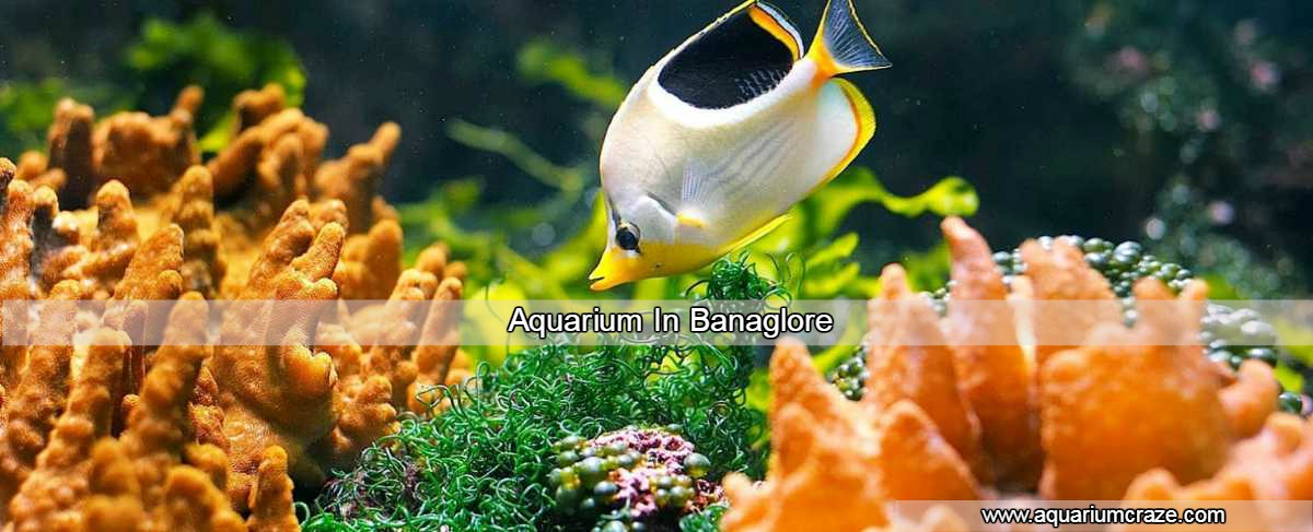Aquarium Consultant And Aquarium Design Architecture