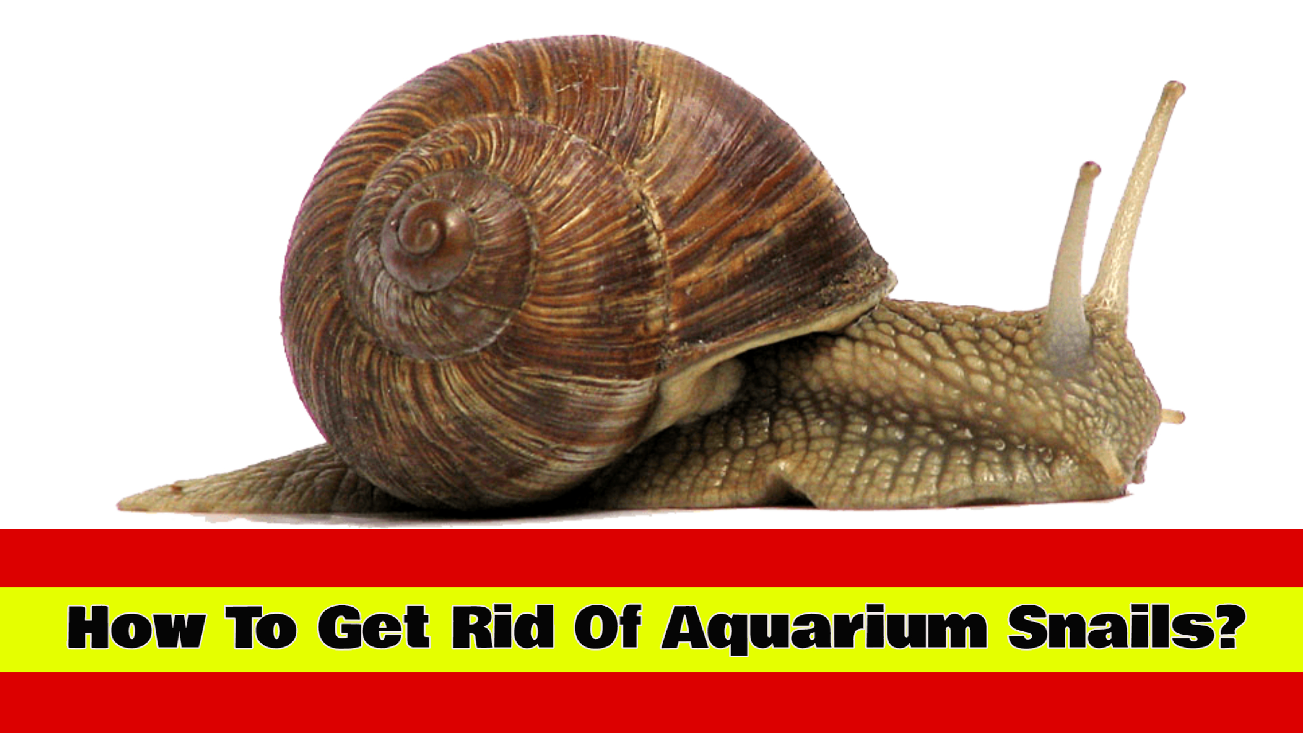 How To Get Rid Of Aquarium Snails Effectively?