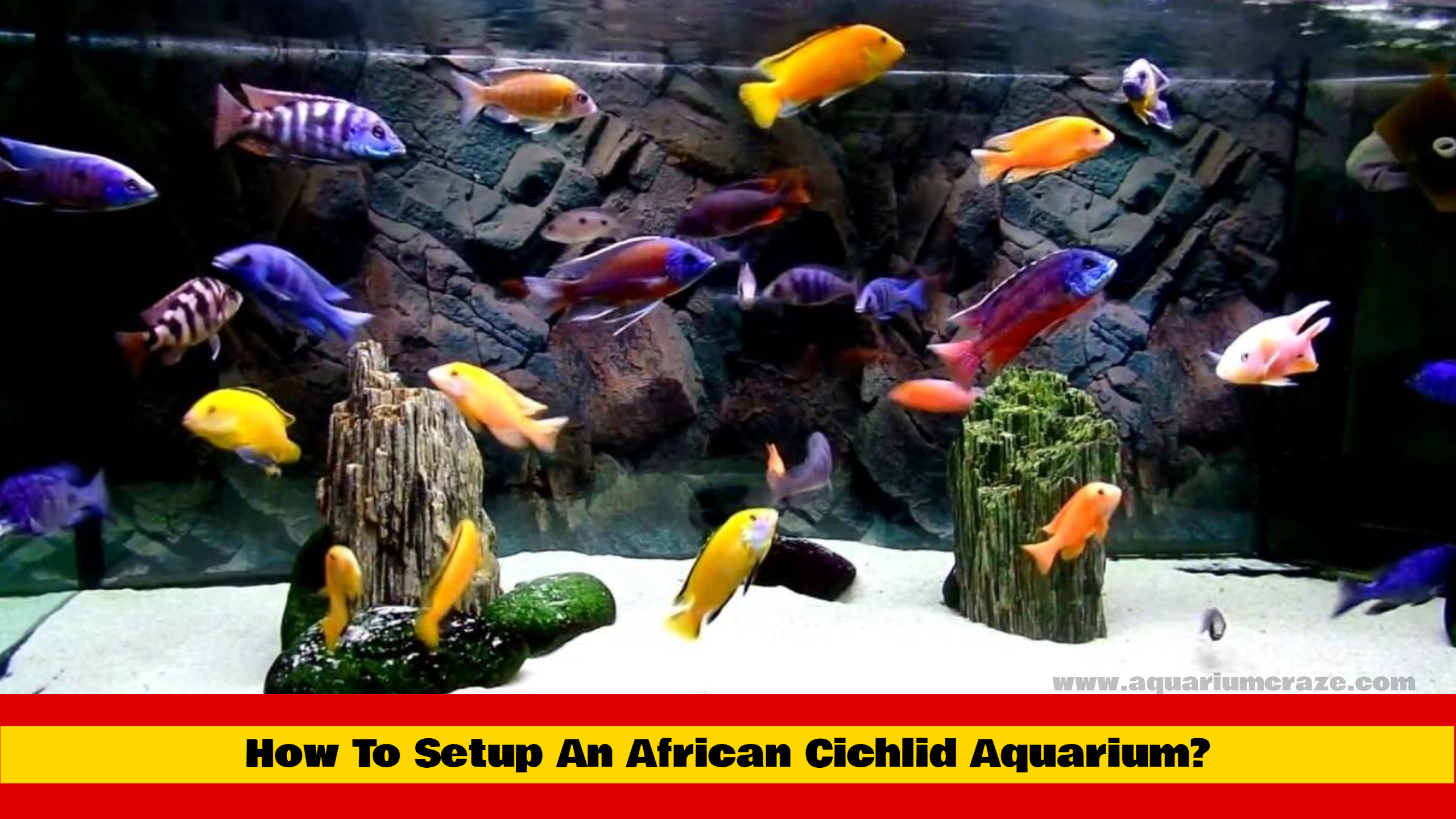 How To Setup An African Cichlid Aquarium?